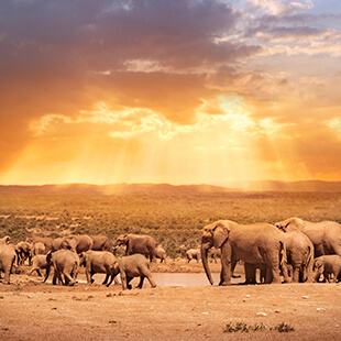 elephants-south-africa-sun