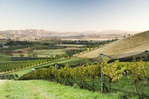 greystone vineyard waipara valley