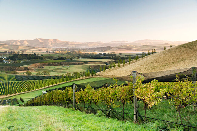 greystone vineyard waipara valley