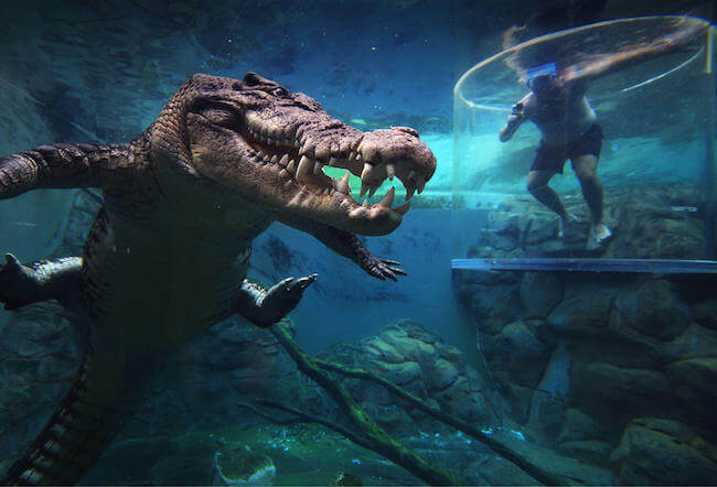 crocosaurus cove australia