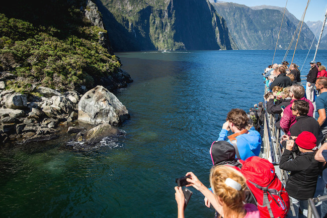 milford sound cruise real journeys