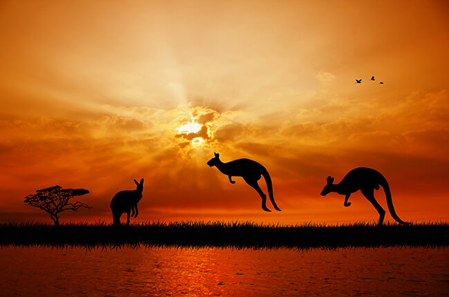 Sunset of Kangaroo Island, vibrant orange skies with silhouettes of Kangaroos hopping in front of the sun