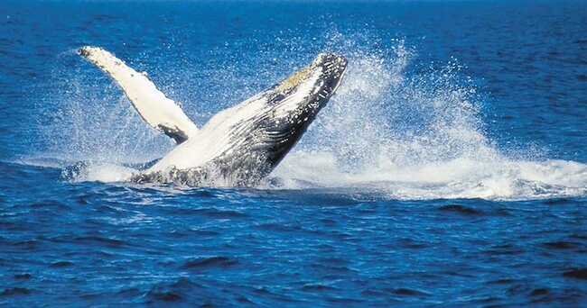 fraser island whale watching autralia