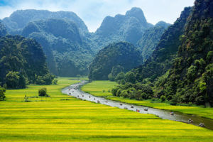 rice fields and river in vietnam