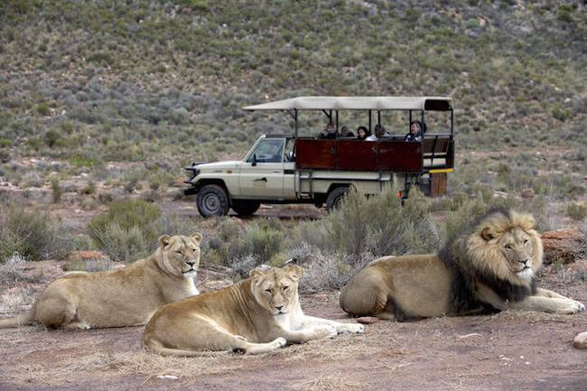 aquila game drive south africa