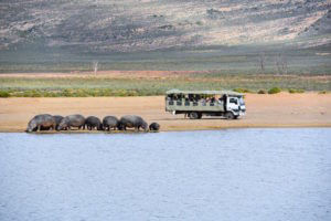 aquila game safari near cape town