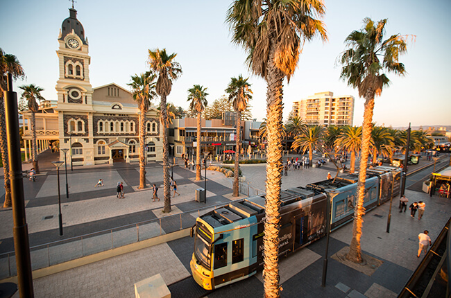 Adelaide centre with town hall, palm trees, and modern tram featuring under clear blue skies