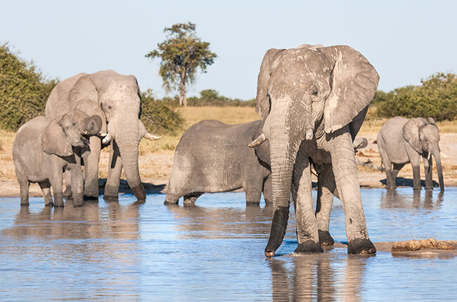 Herd of elephants gathered around a watering hole