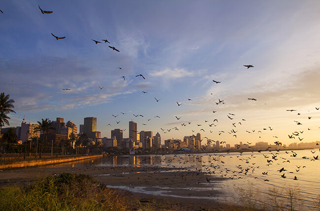 Coastal view of Durban beach, with swarm of birds flying low