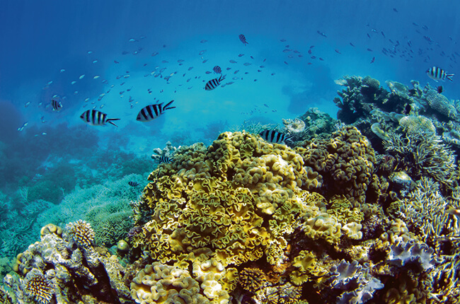 Diverse group of fish swimming around the colourful coral of the Great Barrier Reef