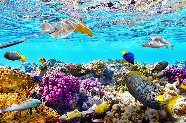 One of the wonders of the underwater world, showing colourful marine life