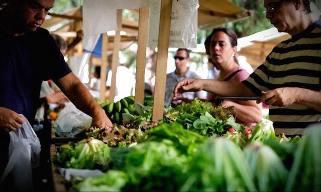 organic food market durban