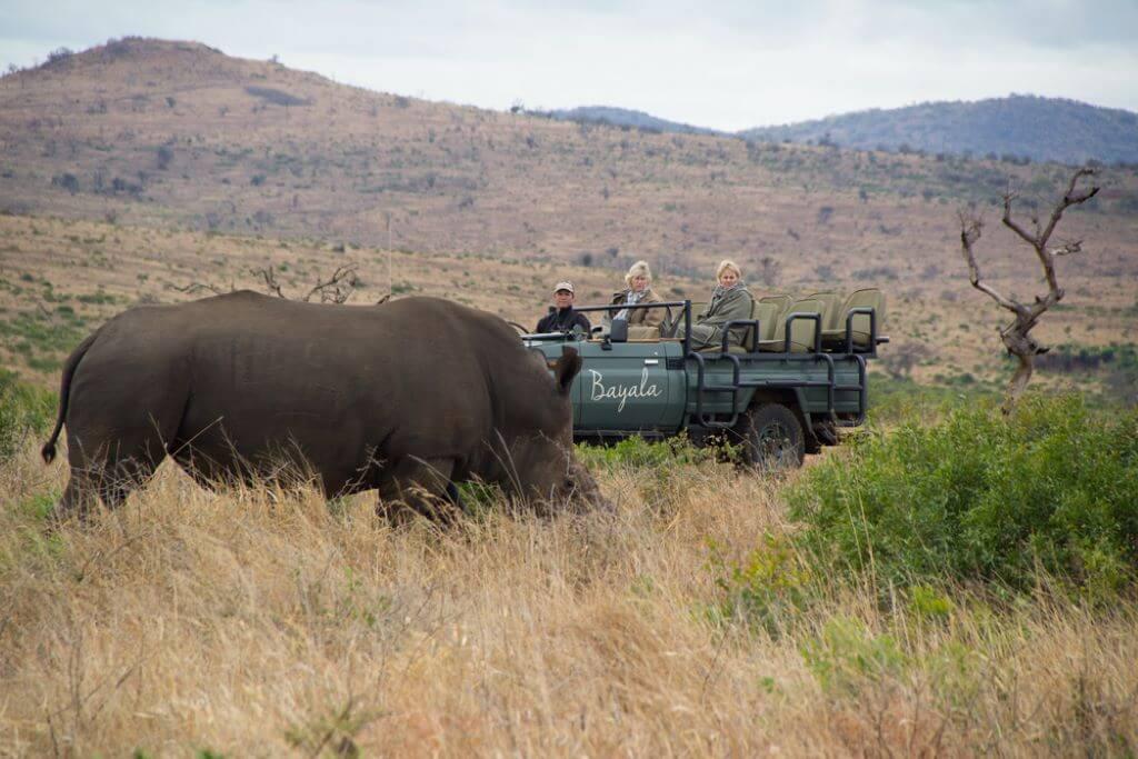 South Africa_Bayala_Safari