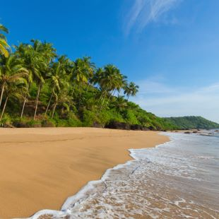 Goa beach with sea and palm trees